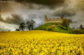 Hume Castle Rapeseed